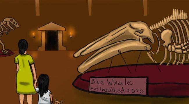 Felix Korda - Blue Whale Illustration
