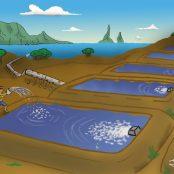 #3|Aquakultur - wirklich so gut wie alle sagen?|