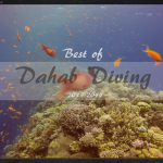 Best of Diving in Dahab 2013-2014 | Our oceans need help |