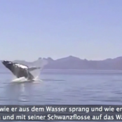 Wow!! Amazing reaction of a humpback whale, that was freed from fishernet!
