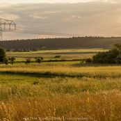 Holidays in northern Germany - Part #2   Safari with a local - hares, landscapes and deers!
