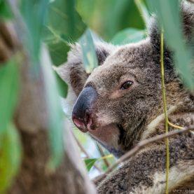 #1 Camping on North Stradbroke Island, Australia | Koalas, Kangaroos and Mantas