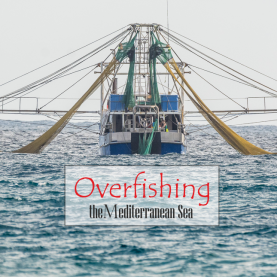 Overfishing the Mediterranean Sea   Common Fisheries Policy of the EU