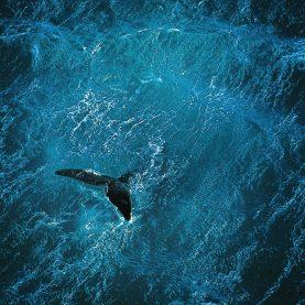 Planet Ocean | youtube.com