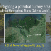 Help me fund my Master project on Hammerhead Shark Research on Fiji!