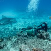 Bull Sharks in Fiji - Diving the Shark Reef Marine Reserve with Beqa Adventure Divers