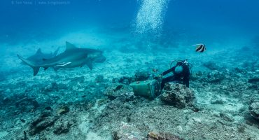 Beqa Adventure Divers Fiji - Beqa Adventure Divers - Feeding Bull Sharks