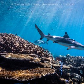 Sustainablesharkdiving.com - a game-changer?