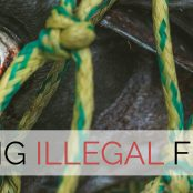 Interview with 'Fishact': fighting illegal fishing