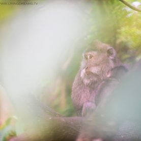 The macaques of Ubud: the Monkey Forest from a photography perspective