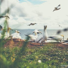Helgoland in August | Camping and Photography