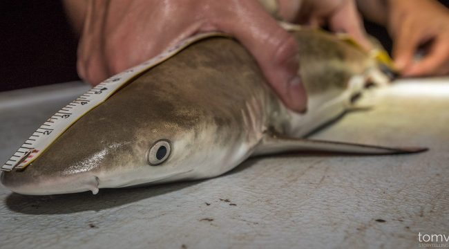#physioshark, CRIOBE, fieldwork,