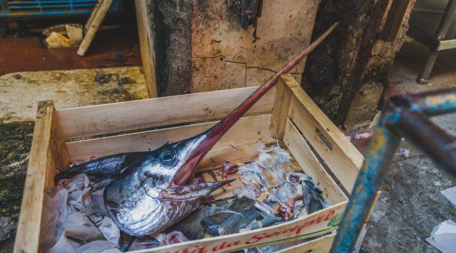 swordfish, Sicily, Italy, fishing, market