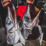 NEW FILM - FISHACT | Fighting Illegal Fishing