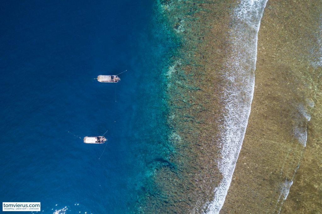 BAD, Beqa Adventure Divers, Sharks, Bull Sharks, Fiji, Pacific Ocean, Marine Biokogy