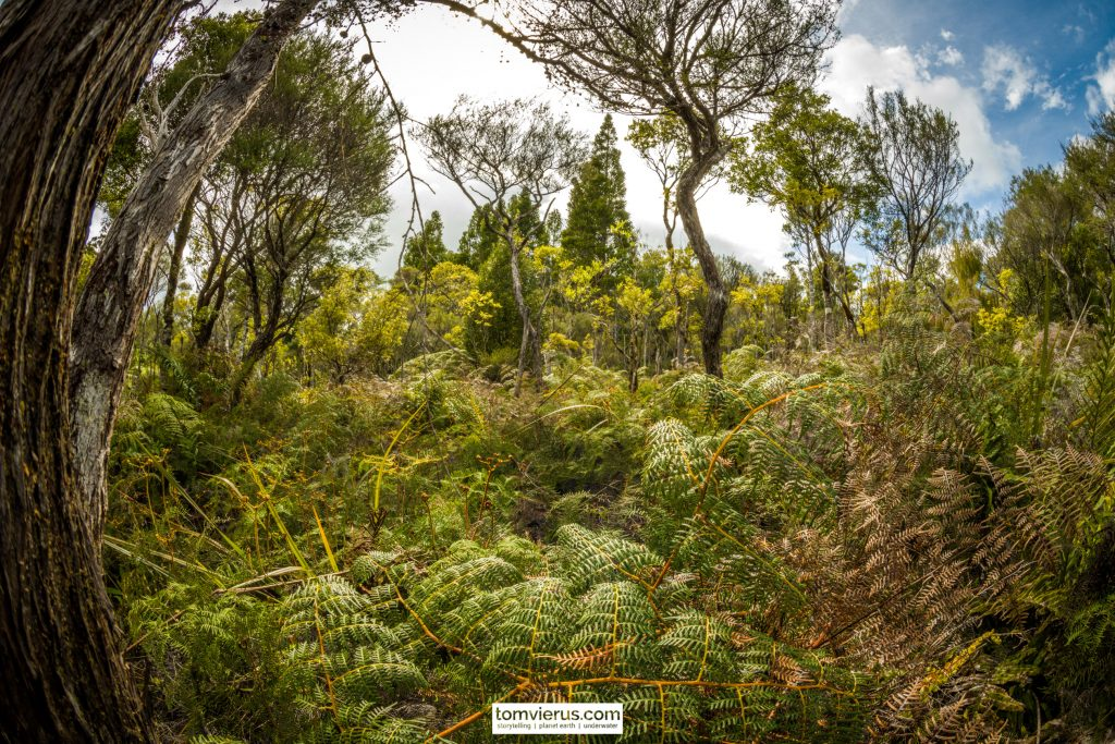 Waipoua forest, wilderness, plants, trees, photography