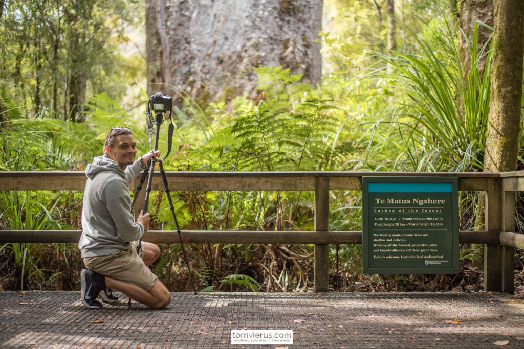 Waipoua forest, father of the forest, Te Matua Ngahere, Kauri, nature