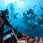 SRMR, My Fiji Shark, Beqa Adventure Divers, Fiji, Shark Reef, Sharks, Conservation