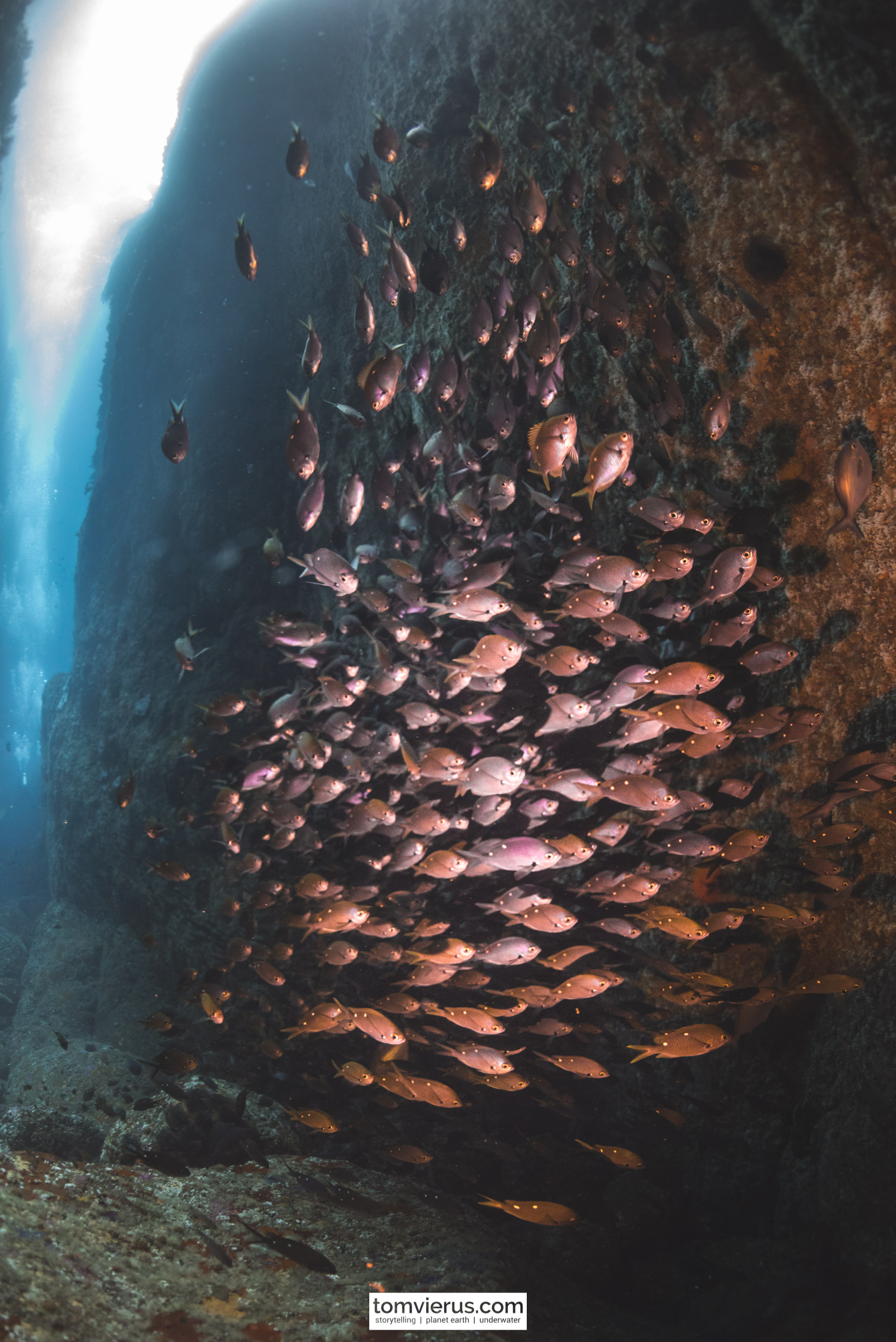 Poor Knights Islands, Diving, Underwater, Nikon, Photography, fish