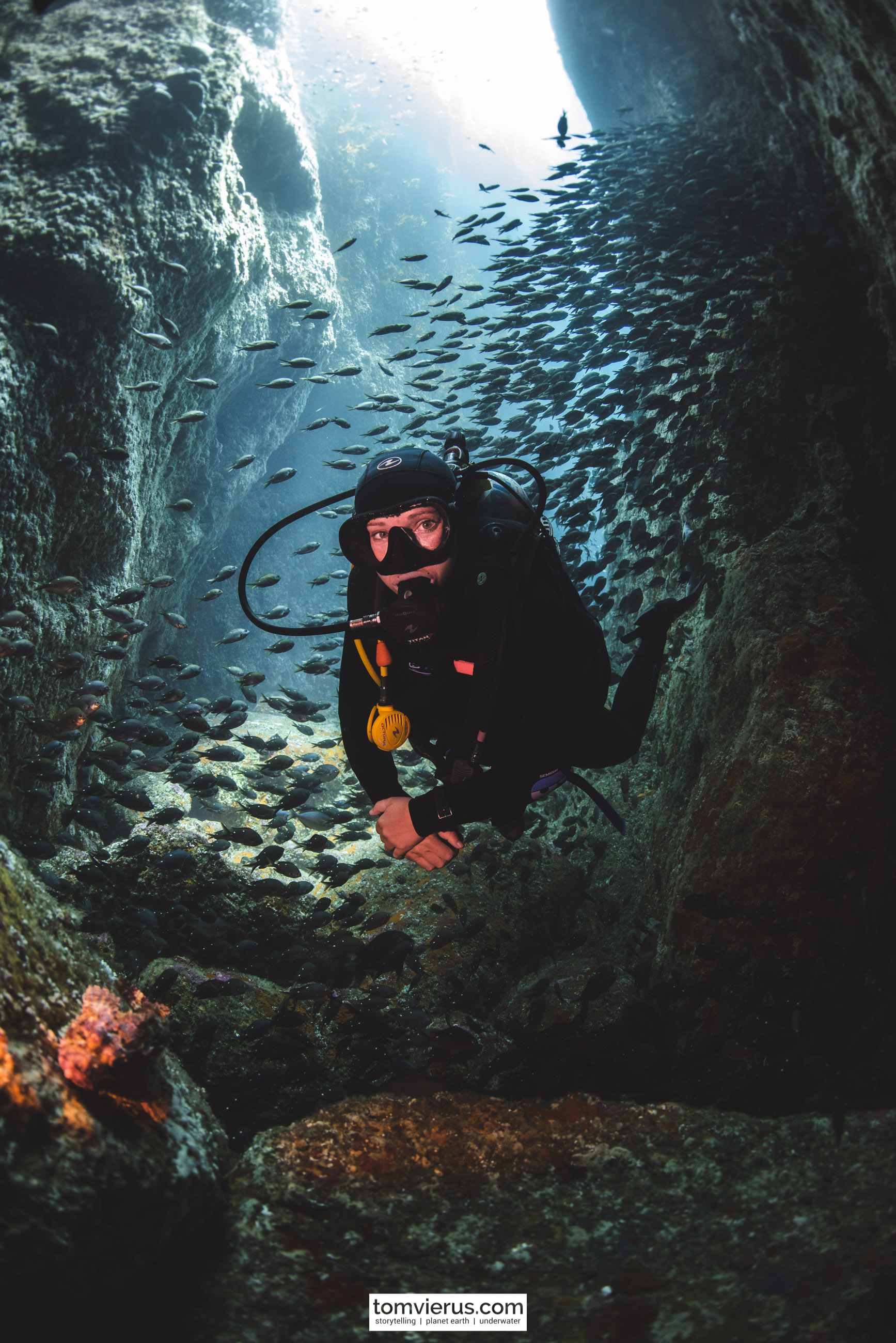 Poor Knights Islands, Diving, Underwater, Nikon, Photography, fish