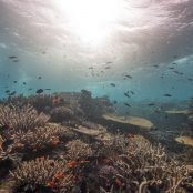 Great Sea Reef Survey | WWF Assignment in Fiji