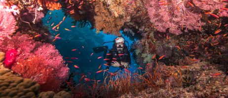 Diving in Fiji during COVID-Lockdown | NAI'A Liveaboard