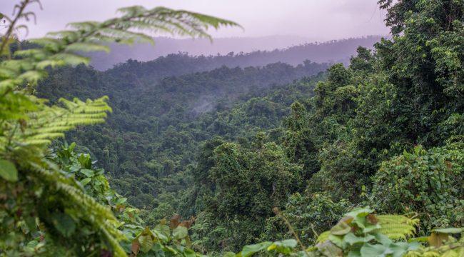 Searching for the Kulawai Bird in Fiji // New Film