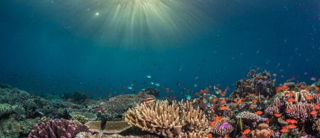 June update: COVID in Fiji, shark photo book and competition successes