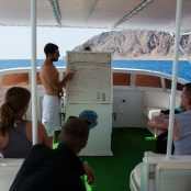 Boat trip, dolphins and the Blue Hole.. but sad news as well..